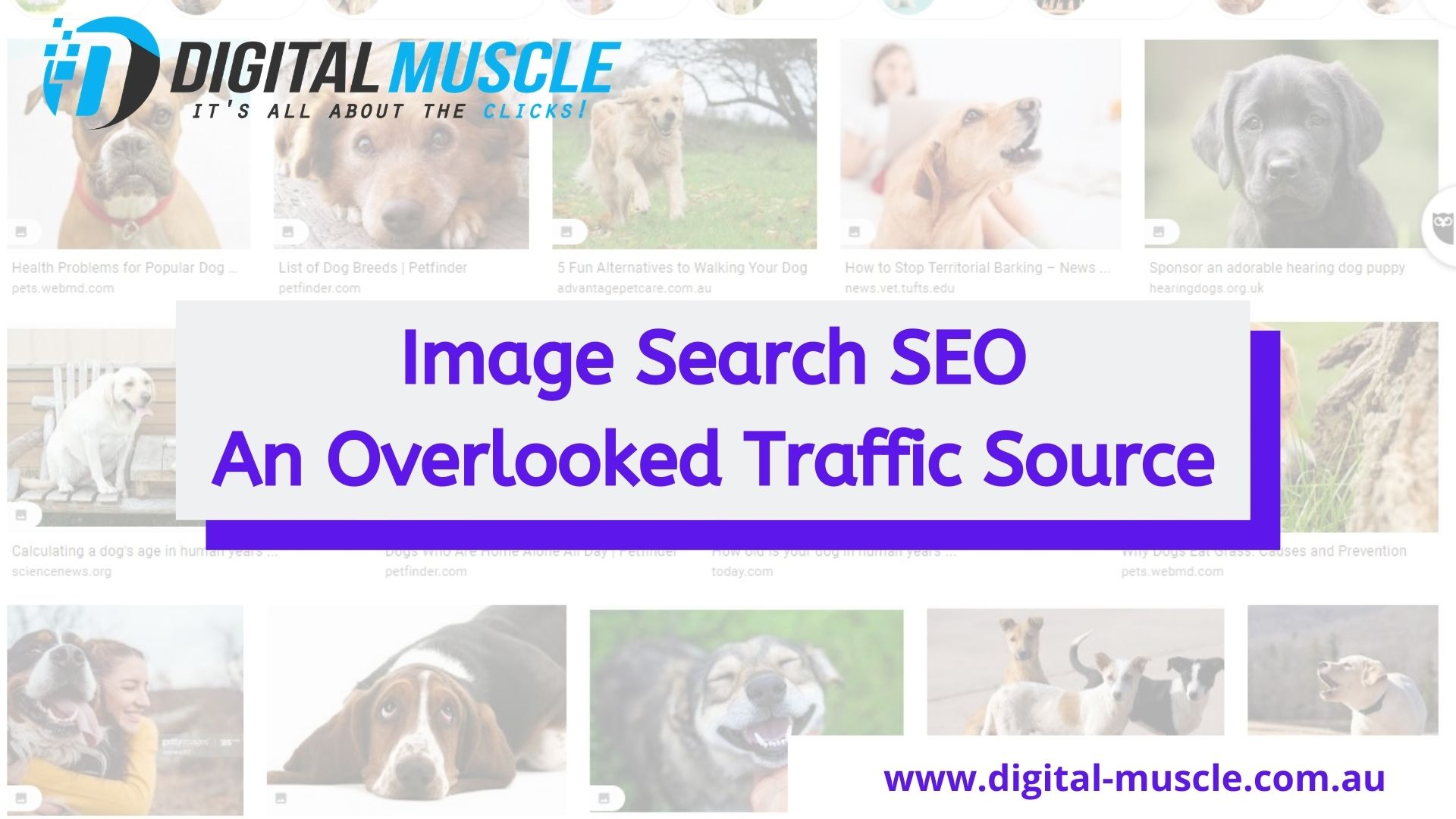 Image Search SEO - An Overlooked Traffic Source You Should Use Now